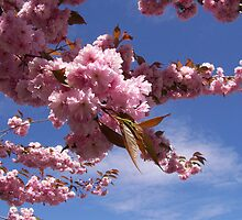 Cherry Blossoms Turning Blue by WaleskaL
