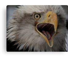 Bald Eagle Talking... Canvas Print