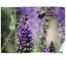 Bumble Bee Flight Poster