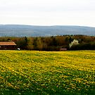 Dundee Mustard Field by Cheri Perry