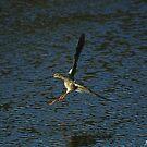 Sandpiper Landing by Jennifer Finn