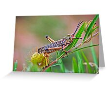 Milkweed Locust Greeting Card