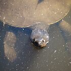 Long Necked Turtle  by D-GaP