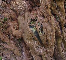 Ancient Yew (Detail) by lezvee