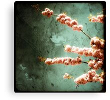 Floraison Rose Canvas Print