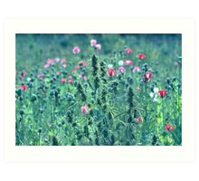 Pot in poppy Art Print