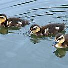 3 little ducks by Robin D. Overacre