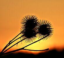 Shadows Flower In Sun by terrebo