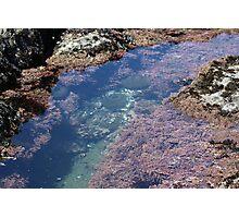 Tidal Pools Photographic Print