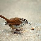 Tiny Wren Tiny Morsel by Bonnie T.  Barry