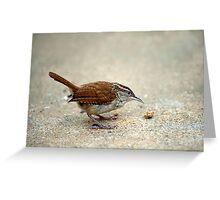 Tiny Wren Tiny Morsel Greeting Card