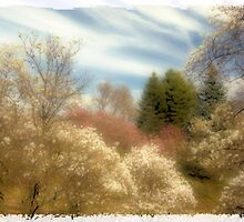 Magnolia Valley by sundawg7