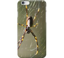 Golden orb weaver iPhone Case/Skin