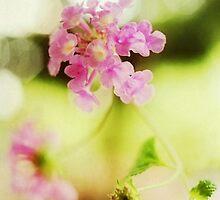 Purple Bloom by sylvia128