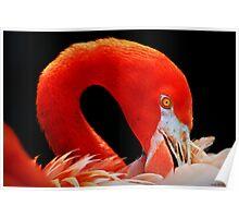 Flamingo's Best 2 Poster