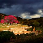 Shrapnel Valley - Gallipoli by Peter Evans