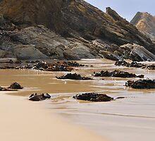 Seaweed sculptures, Quarry Beach by bevanimage