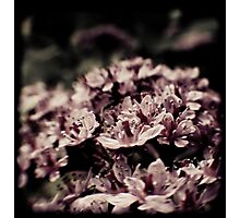 Dreamy Rhododendron Photographic Print