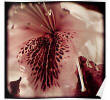 Floral Measles Poster