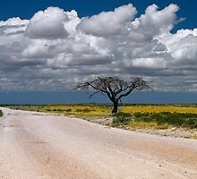 Lone Acacia tree, Etosha National Park, Namibia, Africa. by photosecosse /barbara jones