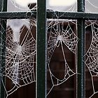 Hoarfrost webs by Sharon McDowall