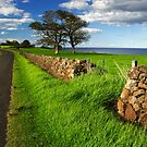 Kiama Dry Stone Wall by Darren Stones
