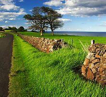 Kiama Dry Stone Wall by Darren Stones