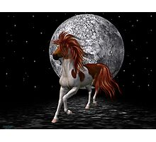 Stallion by the light of the moon Photographic Print