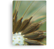 Dandi Seeds Canvas Print