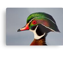 Colours of a Wood Duck Metal Print