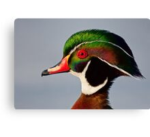 Colours of a Wood Duck Canvas Print