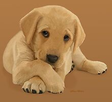 Labrador Puppy by JaneEden