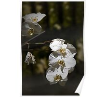 Purely Orchid Poster