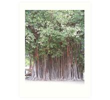 Banyon Tree Art Print