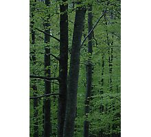 Light green woods Photographic Print