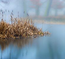 Misty Waters by CJTill