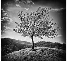 Lonely Tree by Larrie Knights