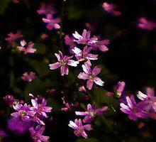 Spring Flowers by Brian Canavan