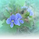 .Little wildflower by Ana Belaj