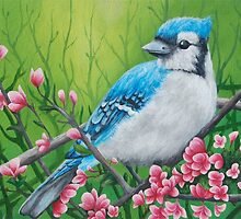 Blue Jay by Beka Judd