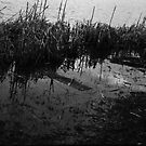 Swamp by Antonia Diewold