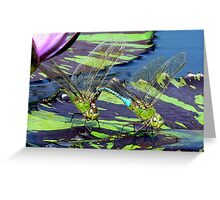 Sitting on a lily pad Greeting Card