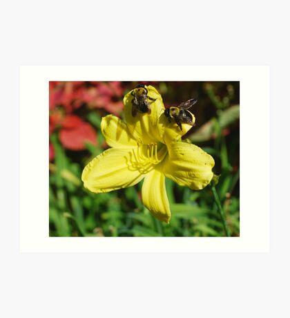 Bumbling Bumble Bees Art Print