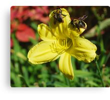 Bumbling Bumble Bees Canvas Print