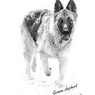 black and white shepherd  by wendywoo1972