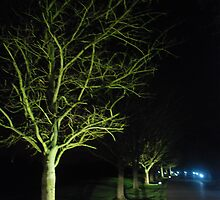 Glowing Green Night Time Breeze by APhotography