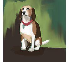 A noble beagle Photographic Print