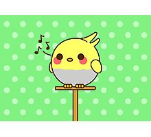 Kawaii bird Photographic Print