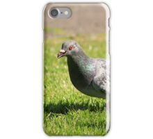 Pigeons in the park iPhone Case/Skin