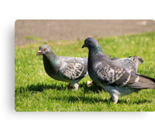 Pigeons in the park Canvas Print